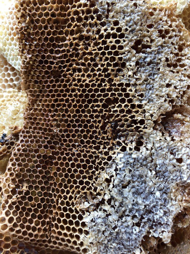 Plastry pszczele z miodem gryczanym